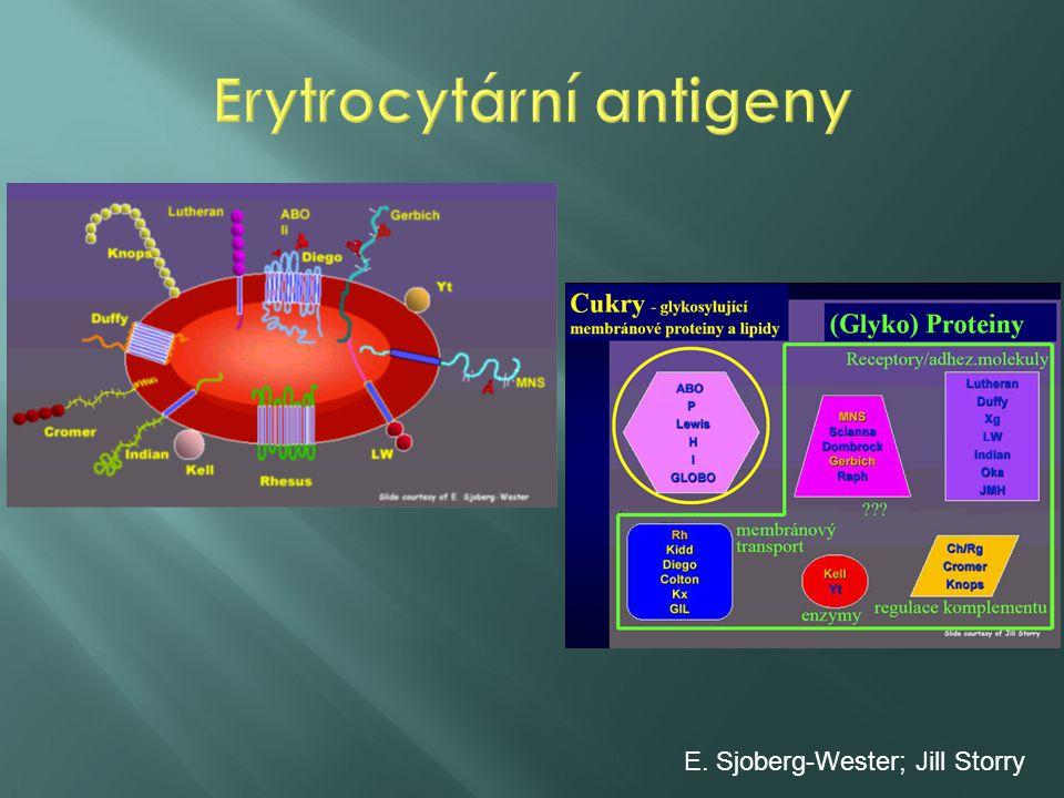 Erytrocytární antigeny