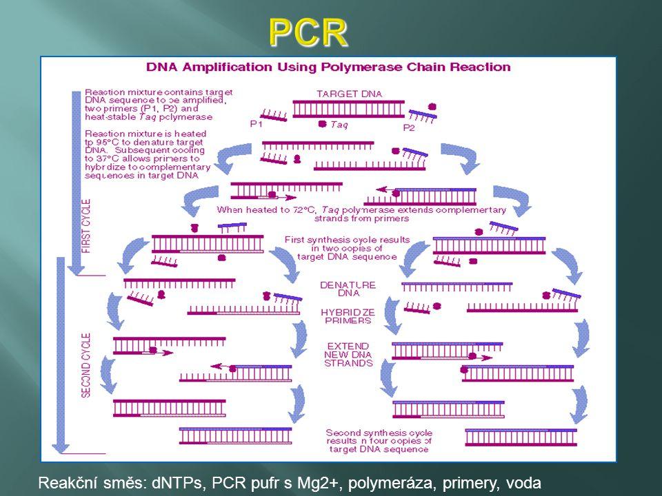 PCR Reakční směs: dNTPs, PCR pufr s Mg2+, polymeráza, primery, voda