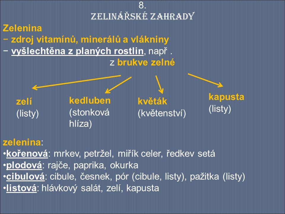 8. ZELINÁŘSKÉ ZAHRADY Zelenina. zdroj vitamínů, minerálů a vlákniny. vyšlechtěna z planých rostlin, např .