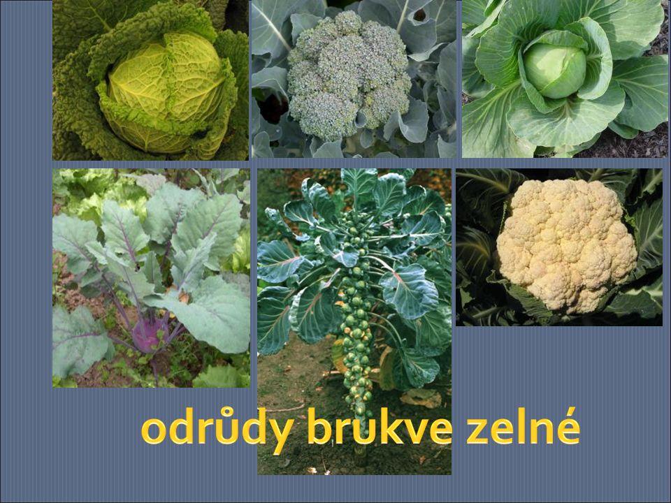 odrůdy brukve zelné