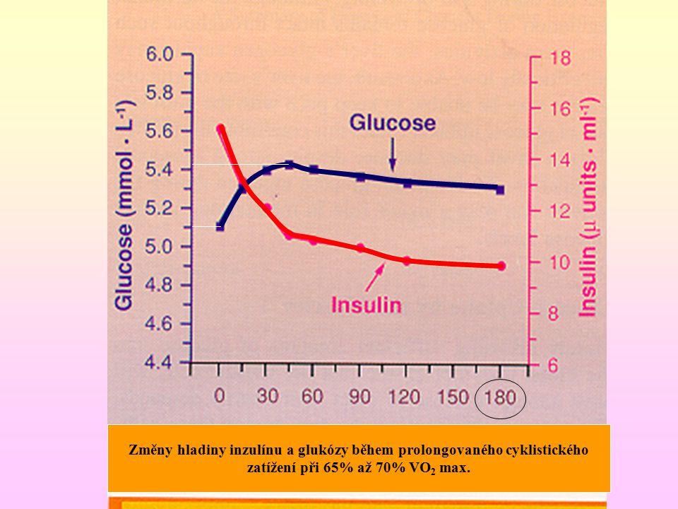Změny hladiny inzulínu a glukózy během prolongovaného cyklistického