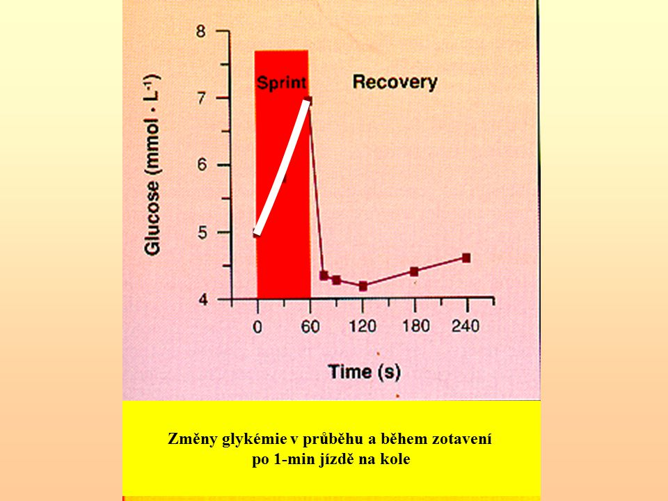 Změny glykémie v průběhu a během zotavení