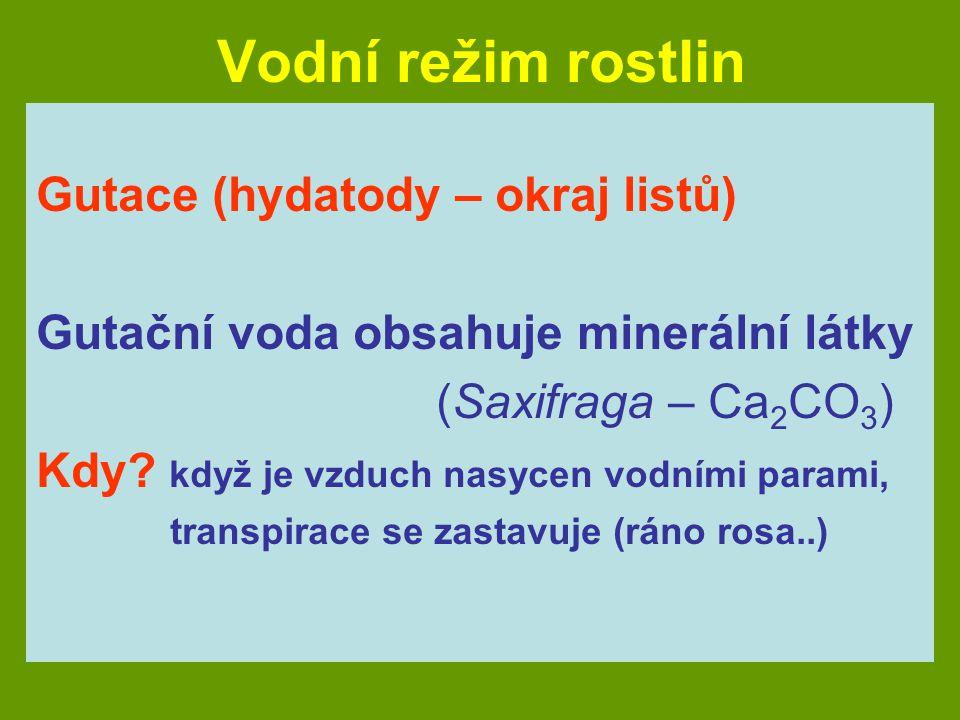 Vodní režim rostlin Gutace (hydatody – okraj listů)