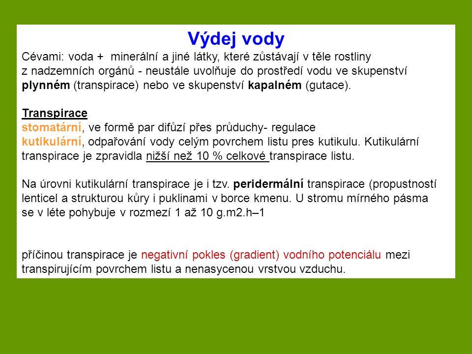 Výdej vody Cévami: voda + minerální a jiné látky, které zůstávají v těle rostliny.