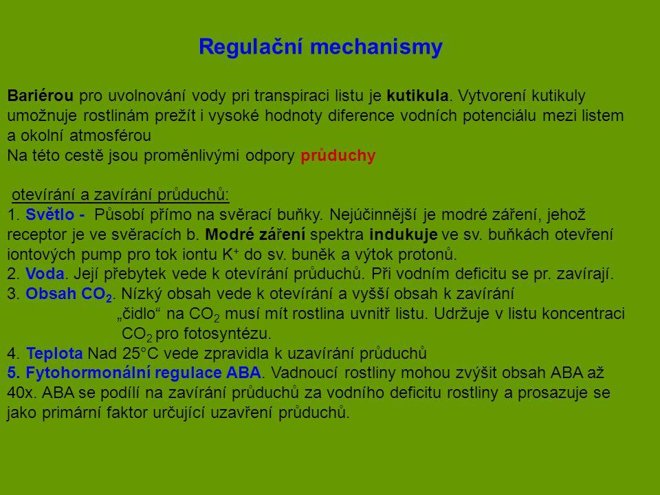 Regulační mechanismy Bariérou pro uvolnování vody pri transpiraci listu je kutikula. Vytvorení kutikuly.