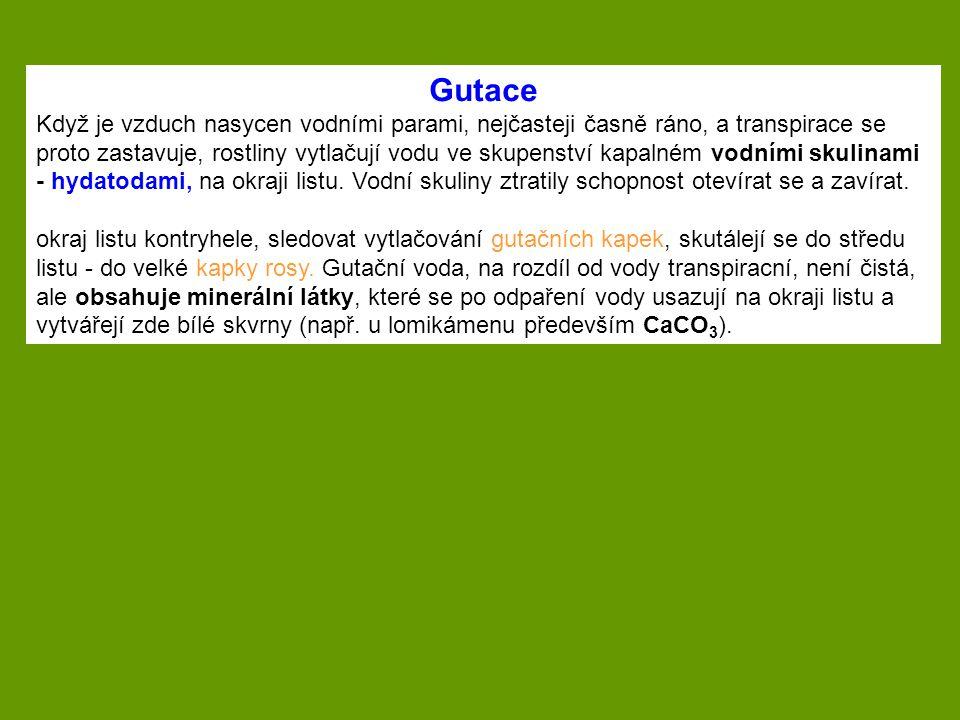 Gutace