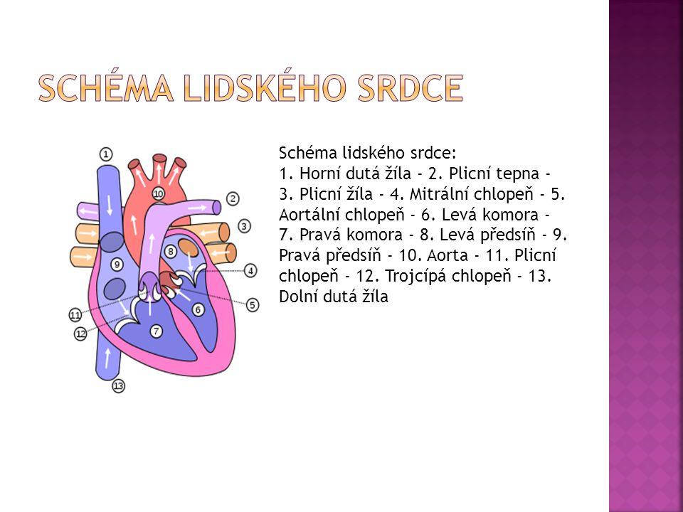 Schéma lidského srdce Schéma lidského srdce: