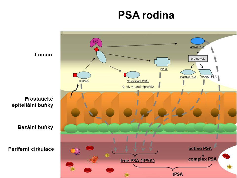 PSA rodina Lumen Prostatické epiteliální buňky Bazální buňky