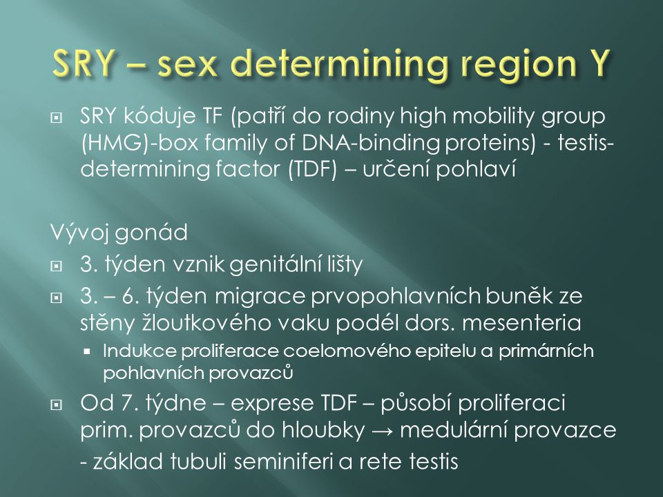 SRY – sex determining region Y
