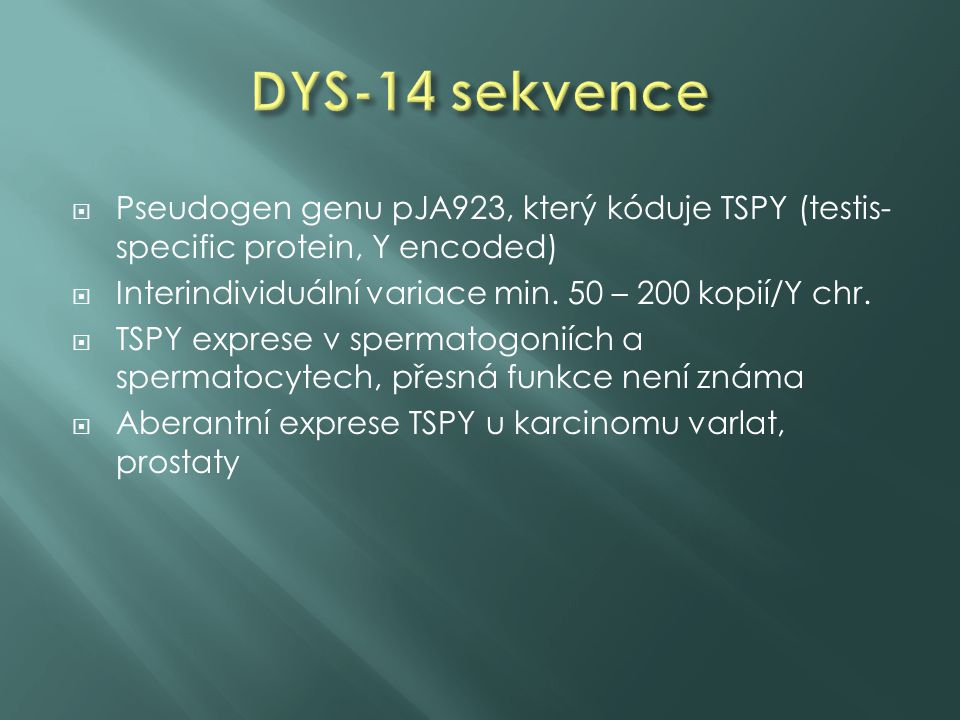 DYS-14 sekvence Pseudogen genu pJA923, který kóduje TSPY (testis-specific protein, Y encoded) Interindividuální variace min. 50 – 200 kopií/Y chr.