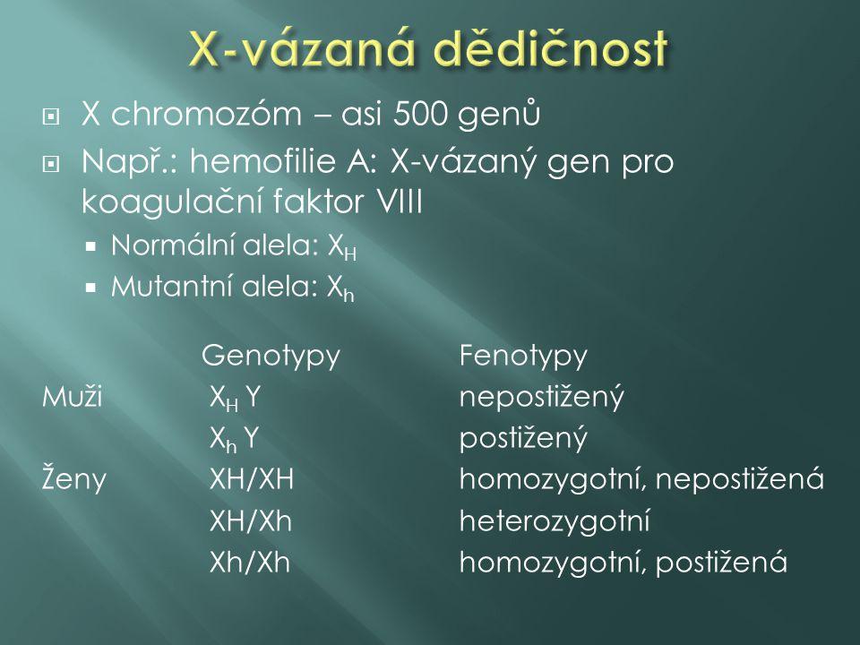 X-vázaná dědičnost X chromozóm – asi 500 genů