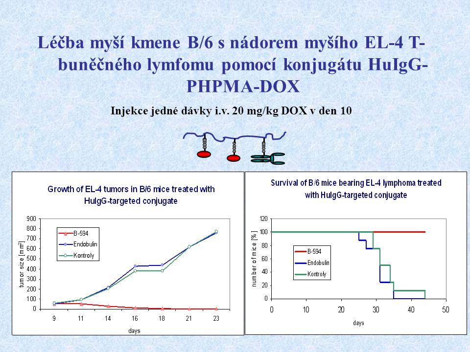 Injekce jedné dávky i.v. 20 mg/kg DOX v den 10