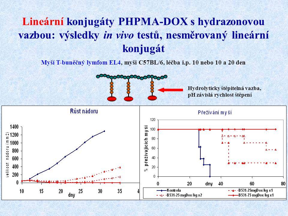 Lineární konjugáty PHPMA-DOX s hydrazonovou vazbou: výsledky in vivo testů, nesměrovaný lineární konjugát