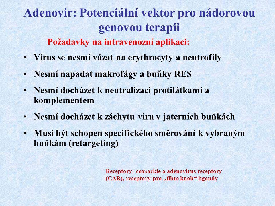 Adenovir: Potenciální vektor pro nádorovou genovou terapii