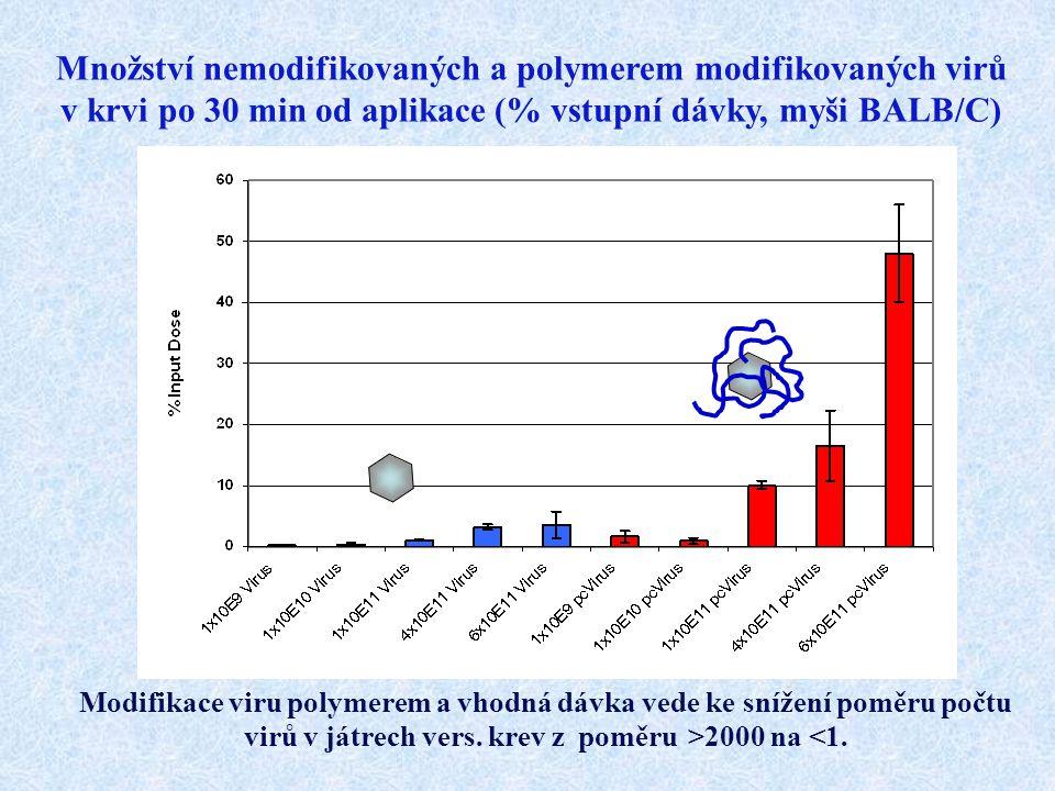 Množství nemodifikovaných a polymerem modifikovaných virů v krvi po 30 min od aplikace (% vstupní dávky, myši BALB/C)