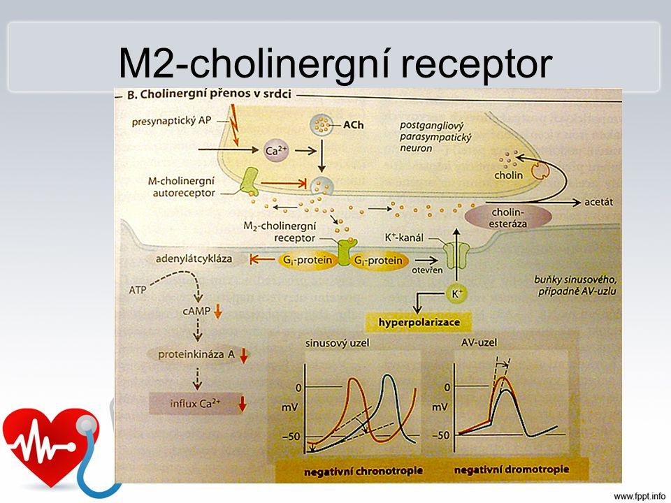 M2-cholinergní receptor