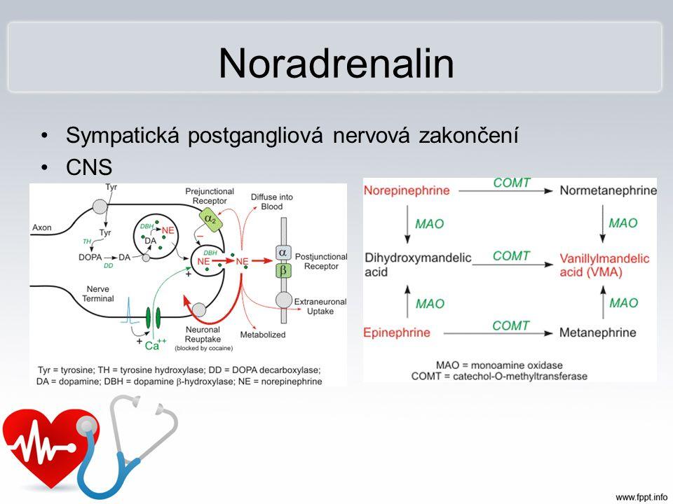 Noradrenalin Sympatická postgangliová nervová zakončení CNS