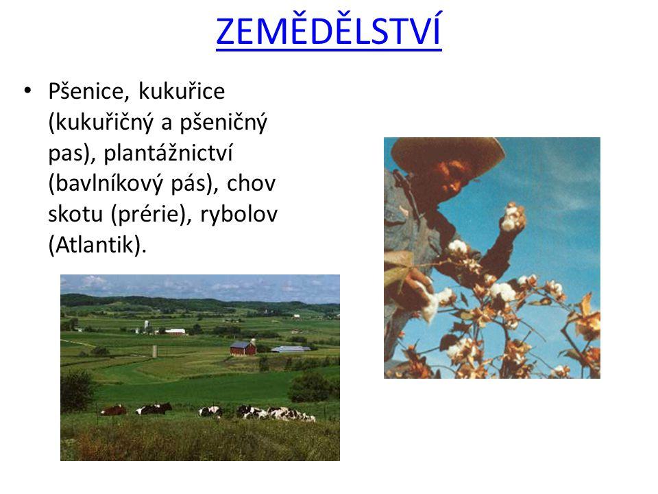 ZEMĚDĚLSTVÍ Pšenice, kukuřice (kukuřičný a pšeničný pas), plantážnictví (bavlníkový pás), chov skotu (prérie), rybolov (Atlantik).
