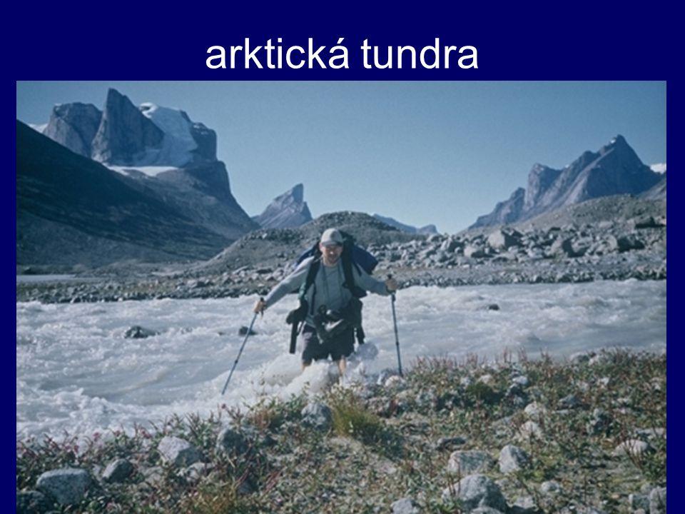 arktická tundra