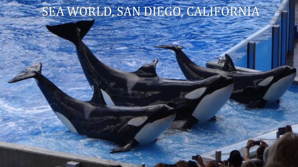 Sea world, san diego, california