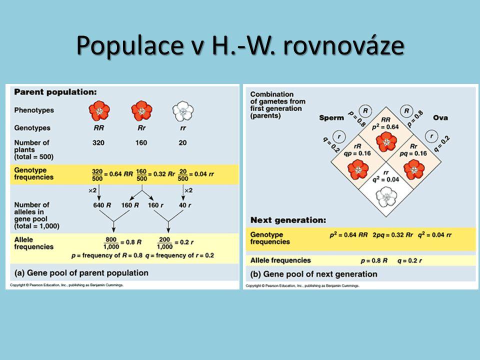 Populace v H.-W. rovnováze