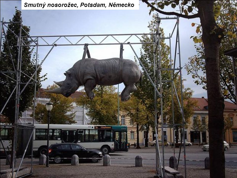 Smutný nosorožec, Potsdam, Německo