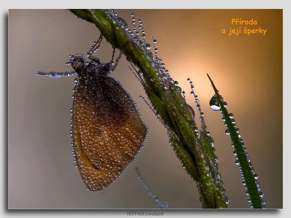 Příroda a její šperky
