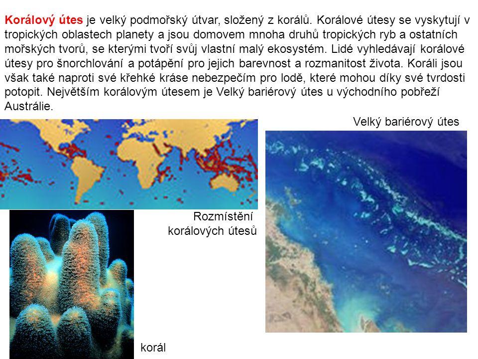 Korálový útes je velký podmořský útvar, složený z korálů