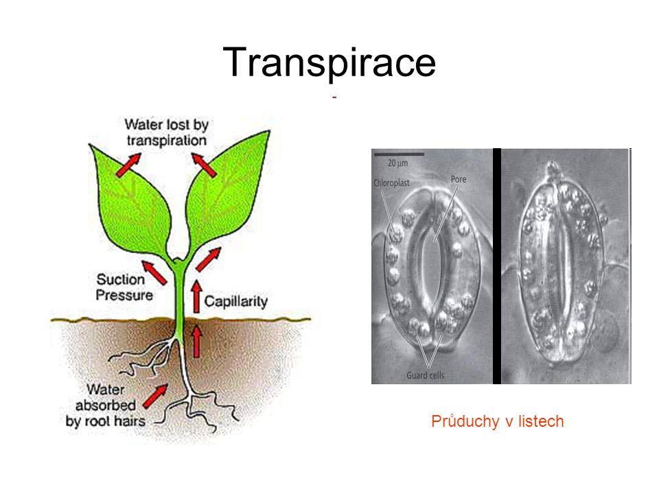 Transpirace Průduchy v listech