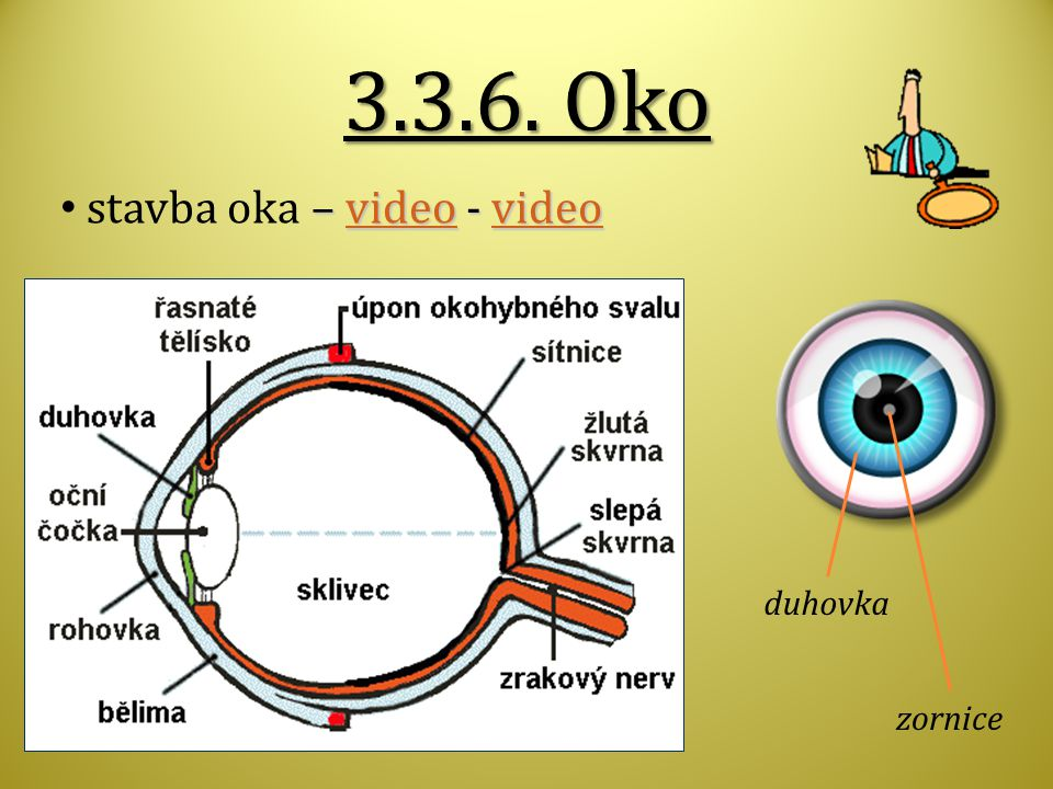 3.3.6. Oko stavba oka – video - video duhovka zornice