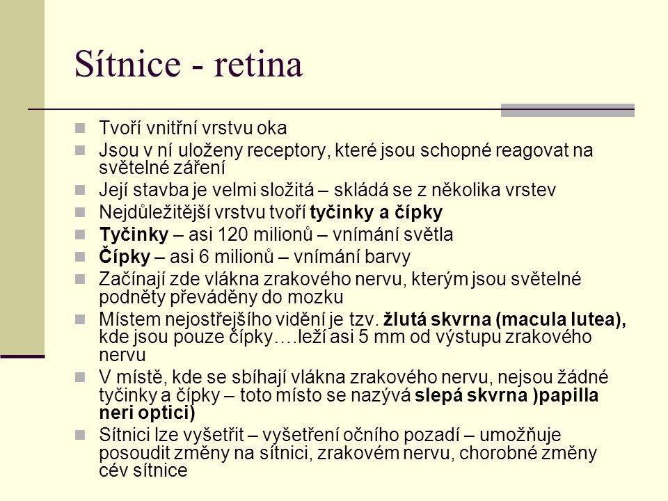 Sítnice - retina Tvoří vnitřní vrstvu oka