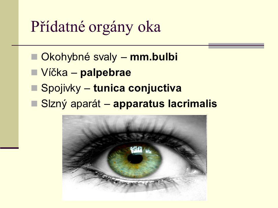 Přídatné orgány oka Okohybné svaly – mm.bulbi Víčka – palpebrae