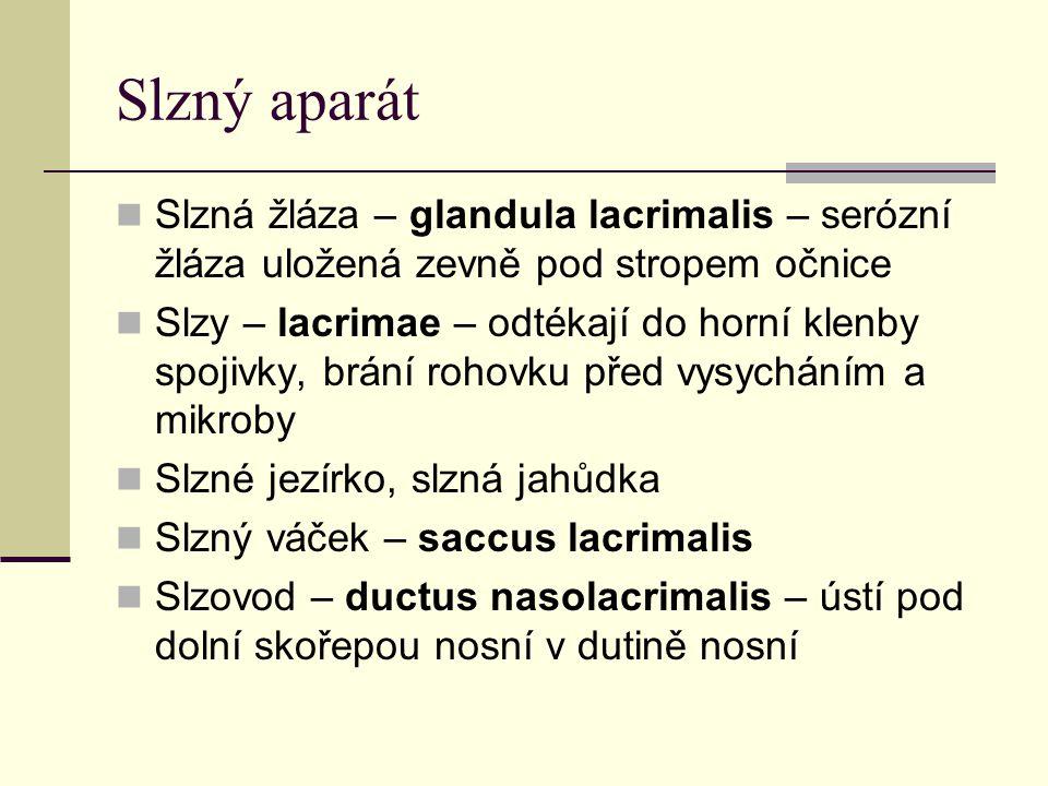 Slzný aparát Slzná žláza – glandula lacrimalis – serózní žláza uložená zevně pod stropem očnice.