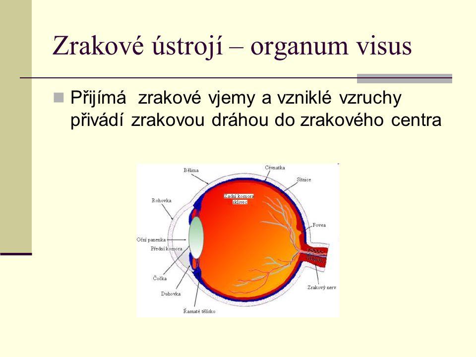 Zrakové ústrojí – organum visus