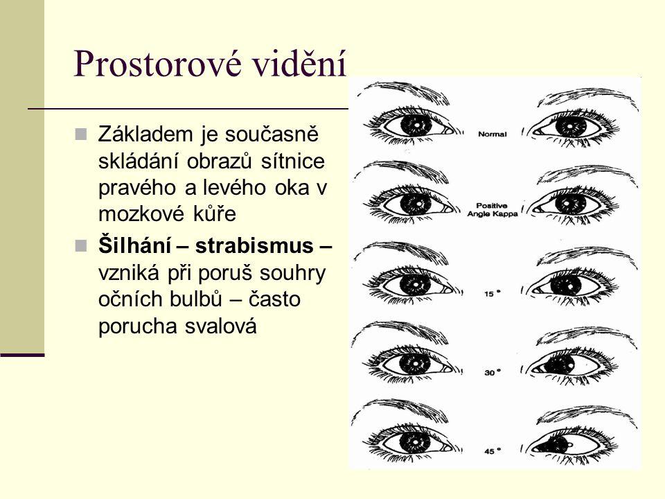 Prostorové vidění Základem je současně skládání obrazů sítnice pravého a levého oka v mozkové kůře.