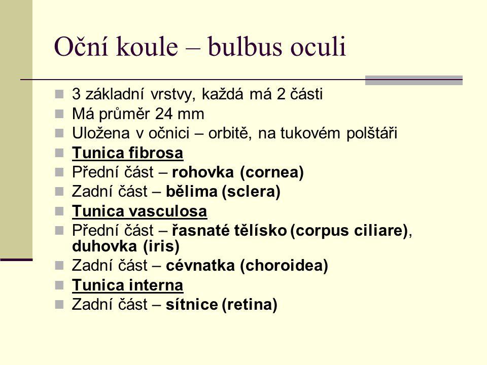 Oční koule – bulbus oculi
