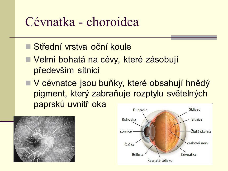 Cévnatka - choroidea Střední vrstva oční koule