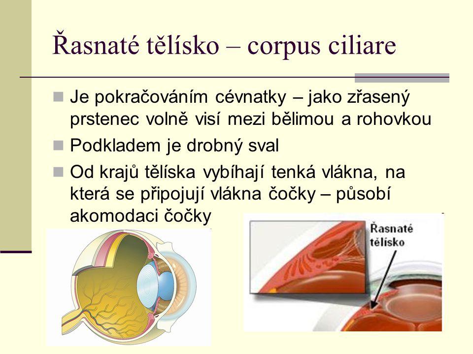 Řasnaté tělísko – corpus ciliare