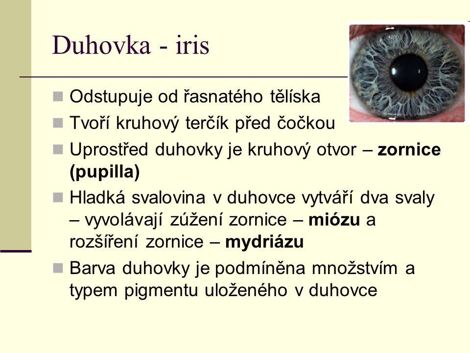 Duhovka - iris Odstupuje od řasnatého tělíska