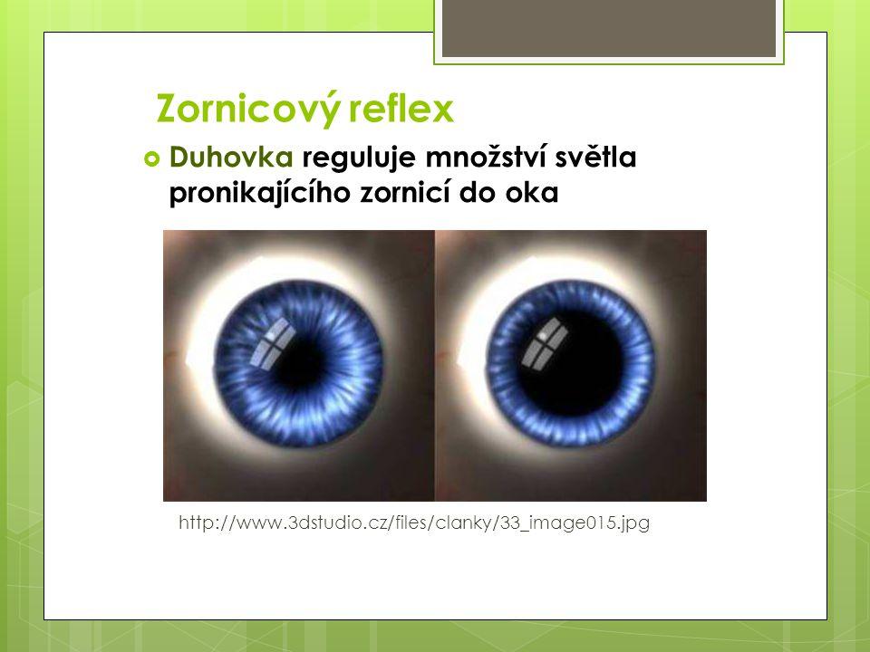 Zornicový reflex Duhovka reguluje množství světla pronikajícího zornicí do oka.
