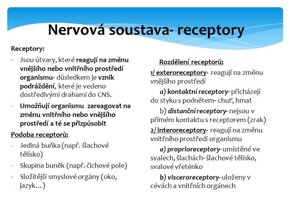 Nervová soustava- receptory