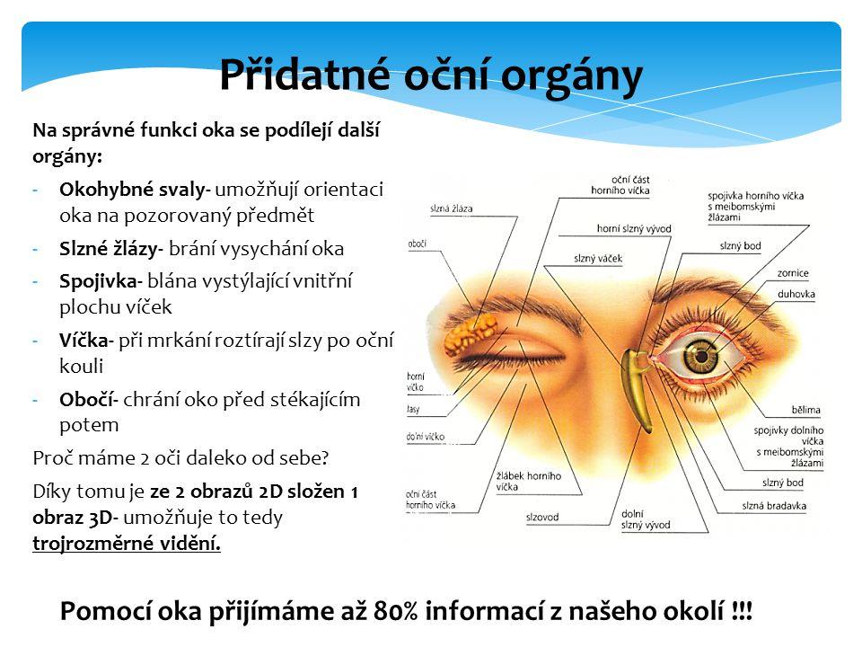 Přidatné oční orgány Na správné funkci oka se podílejí další orgány: Okohybné svaly- umožňují orientaci oka na pozorovaný předmět.