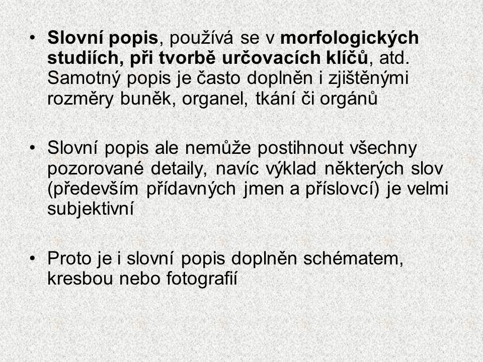 Slovní popis, používá se v morfologických studiích, při tvorbě určovacích klíčů, atd. Samotný popis je často doplněn i zjištěnými rozměry buněk, organel, tkání či orgánů