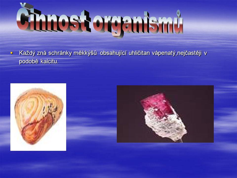 Činnost organismů Každý zná schránky měkkýšů obsahující uhličitan vápenatý,nejčastěji v podobě kalcitu.
