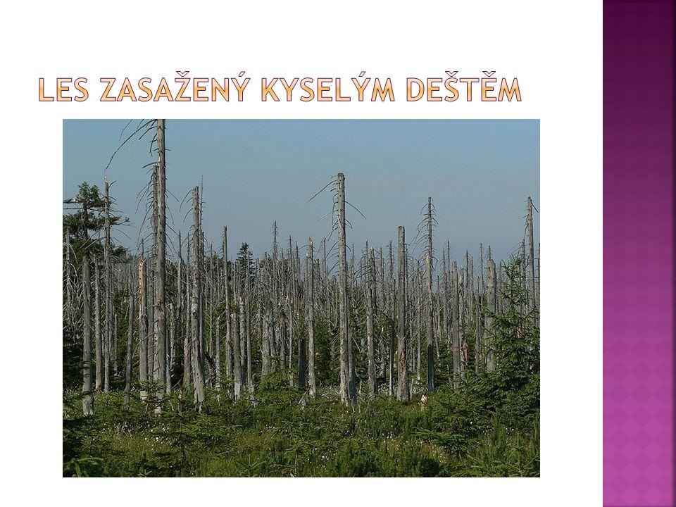 Les zasažený kyselým deštěm