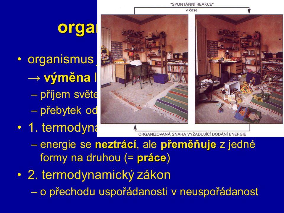 organismy a energie organismus je otevřený systém