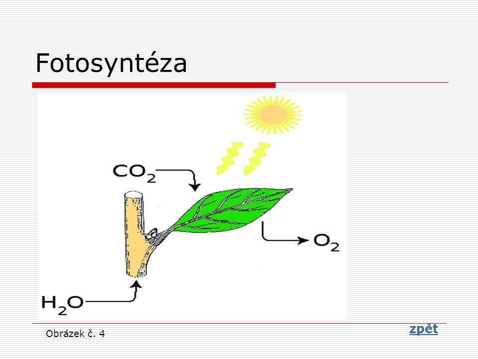 Fotosyntéza zpět zpět Obrázek č. 4