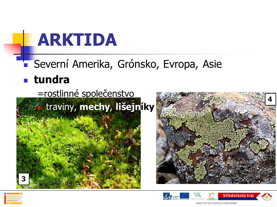 ARKTIDA Severní Amerika, Grónsko, Evropa, Asie tundra