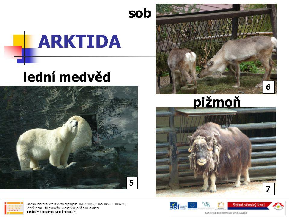 ARKTIDA sob lední medvěd pižmoň 6 5 7