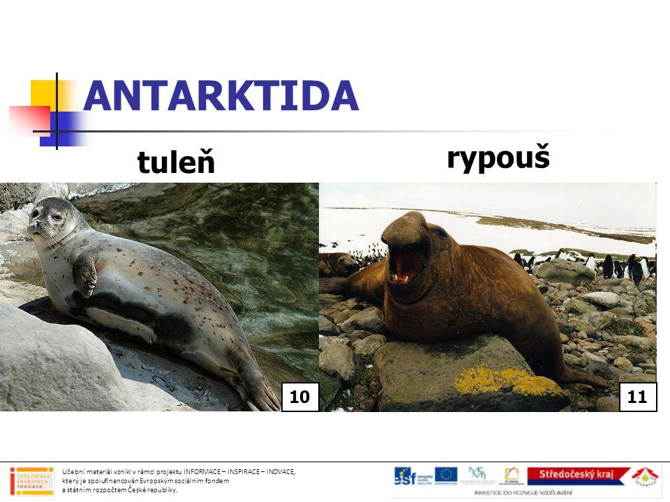 ANTARKTIDA rypouš tuleň 6 6 10 11